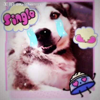 Poor Shadow😭 #single dog#