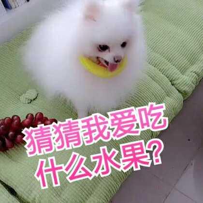 想不到,汪星人对水果也是很挑剔的呢#宠物##萌宠##我的小可爱#