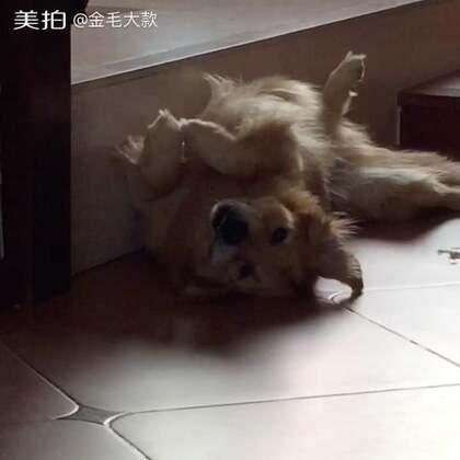 #宠物#一觉睡到下午😂http://c.b6wq.com/h.nG8PEE?cv=KzUB0Y3TGRr&sm=9643a4
