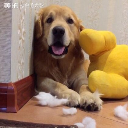 #宠物#缝缝补补又三年啊🤣🤡http://c.b6wq.com/h.norUft?cv=a0XK0Yasz4S&sm=393c41