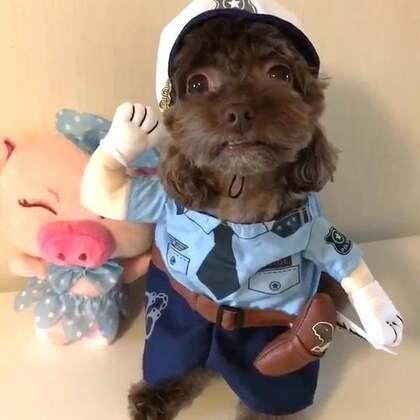 #宠物#报告长官逗宝抓着一只违反交通规则的小猪猪😜😜#我的宠物小精灵#