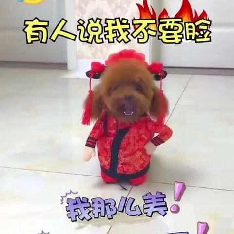 【百变萌宠妞妞美拍】#搞笑##萌宠#有人说我不要脸😂他...