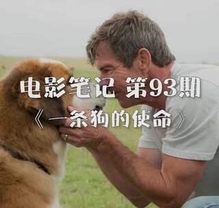 【电影笔记93】忠犬用了四辈子撮合了一对恋人《一条狗的使命》#裹被子跳枕头##非洲迷你刺猬##一张自拍证明你是女生#