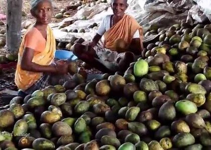 绝对没想到印度的芒果干是这样做的,全靠手一层一层的抹出来.