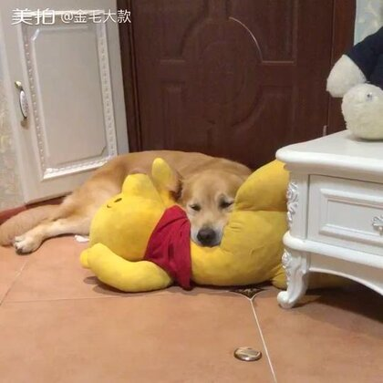 #宠物#缝好了、抢过去心满意足的睡了😎