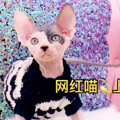 芒果多了个喵弟弟哦👏👏👏它叫jojo儿#喵星人##宠物##搞笑#