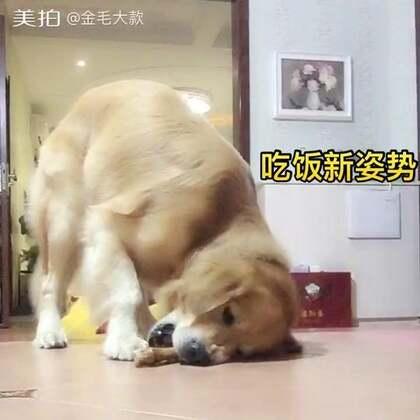 #宠物#甩维尼甩累了、夜宵走一走😊http://c.b6wq.com/h.norUft?cv=a0XK0Yasz4S&sm=393c41