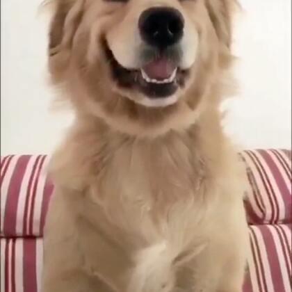 今天群里发了一段搞笑的狗狗视频… 真的要找到岔气 #我要上热门##狗狗撕纸技能##萌宠金毛狗狗#