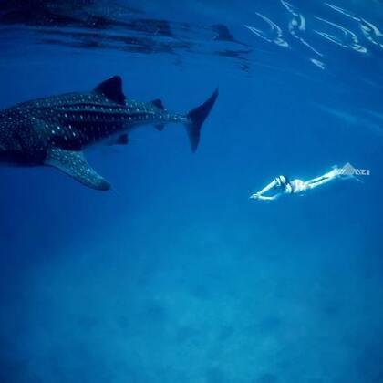 #潜水##旅行##鲸鲨#在海底会遇见奇妙的未知