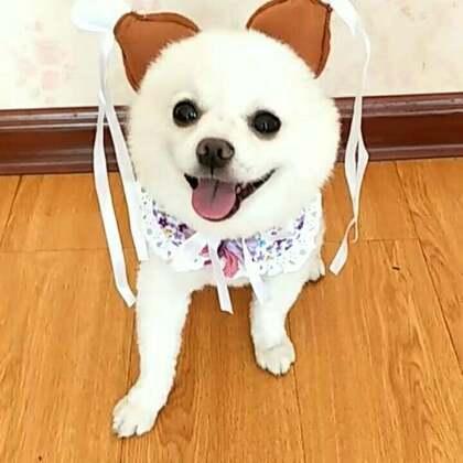 #宠物#嘿嘿嘿,偶滴小可爱,皇冠👑给你戴😂😂#搞笑宠物##我的宠物萌萌哒#
