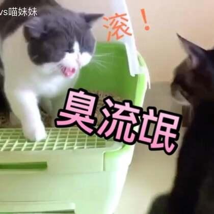 #俩喵欢乐多#视频中的小两位😺完美的诠释了^男喵女喵的如厕论😂😂#宠物##宠物内心小剧场#