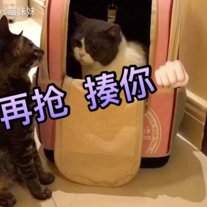 #俩喵欢乐多#😂狼多肉少🙈猫多包少😑你们打 我搬小板凳边上看大戏😜#宠物#