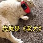 🚗我想在跑车咧,想要一辆法拉咧~#宠物##老大。##阿猫拍有戏#