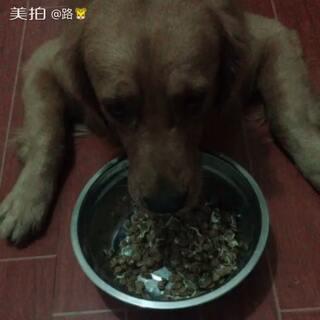 #宿舍的日常##宠物#这小孩被我宠坏了😡😡😡,狗粮一天没吃,闻都不闻一下,晚上实在不忍心伴点鸡肉吃的老香了😩😩😩