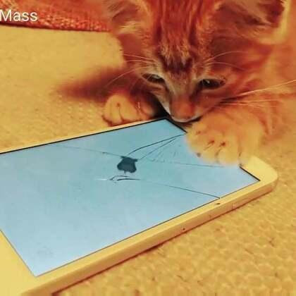 #猫咪成长记#终于亲眼见到猫咪耍捉耗子游戏了😃😃#关爱流浪猫##猫咪游戏#