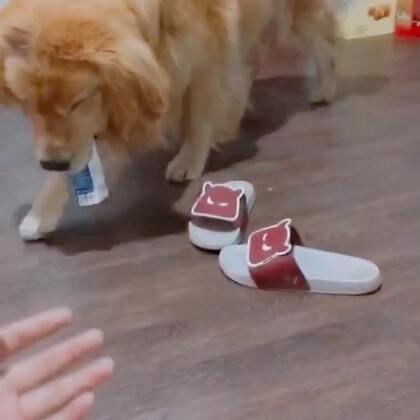 迪奥:非要我爬过去,在去拿奶……有毛病吧#搞笑##宠物#