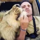 吸猫界的最强王者 👍和狮子亲亲抱抱的狮语者 👍#精美电影##宠物##正能量#