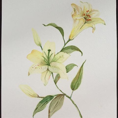 手绘水彩画 手绘花卉 尝试画水彩百合,请求大神们点评指教 咖啡奶茶