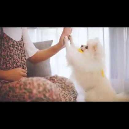 最美好的事,就是跟你一起玩游戏#宠物#