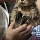 喵:谁还不是个宝宝!#搞笑##宠物#