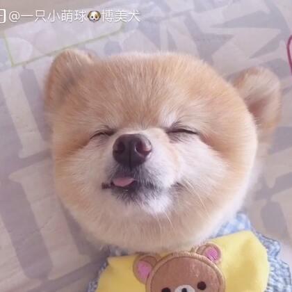 萌化了我的心#萌宠##狗狗睡姿##我的小可爱#