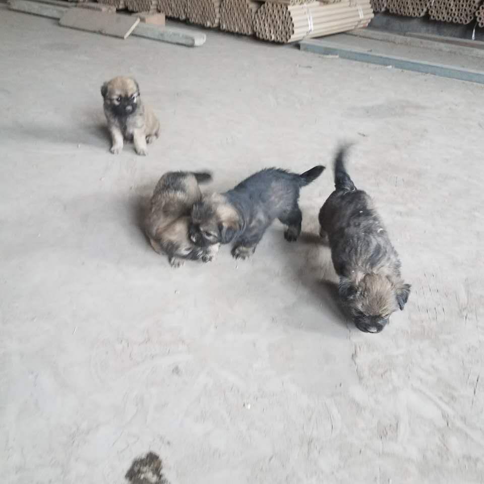 壁纸 动物 狗 狗狗 猫 猫咪 小猫 桌面 960_960