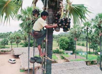 缅甸男人为了喝酒,竟然要爬上7米高的树!@第一次小姐sun 探访缅甸农村里的酒吧,草棚子搭建的酒吧我真的是第一次见!#hi走啦##旅行#【Hi走啦送周杰伦演唱会门票啦,关注微信公众号:Hi 走啦,发送:周杰伦,获取活动规则,你不来抢一张吗?】#我要上热门#
