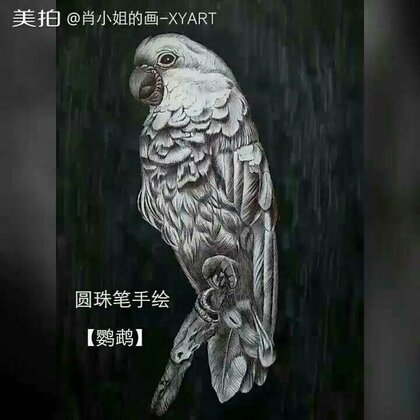 圆珠笔手绘#鹦鹉##美拍最强画手#涂背景的时候后悔了,虽然画残了,但还是想要裱起来!嗯!决定了,裱起来!