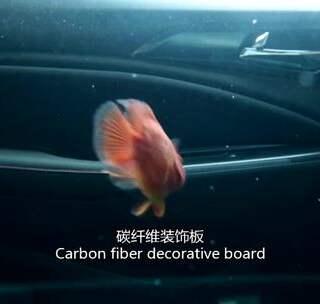 实测:把汽车拿来养鱼是种什么样的体验?#汽车##改装##长安欧尚A800#