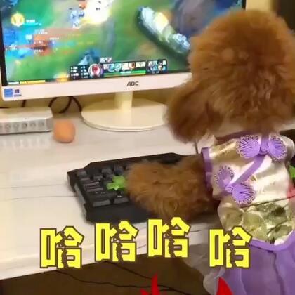 #搞笑##萌宠##汪星人#妞妞游戏迷😂纯属娱乐