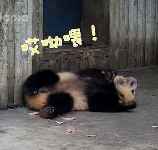 #也就才看二十遍##萌团子陪你过周末# 社会你肉姐:就是你撞的我!你赔!
