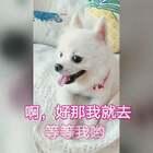 #宠物有戏大赛#小伙伴一起去,彩虹山摘果果吧😜可甜可甜了😃#我的宠物萌萌哒##宠物#