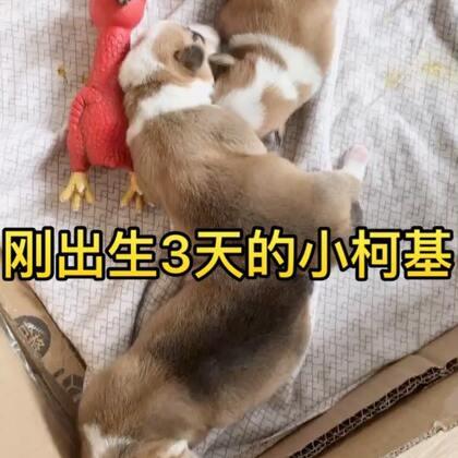 柯柯的宝宝出生啦~第一次见刚出生的小短腿宝宝😄希望他们健康快乐的成长~~