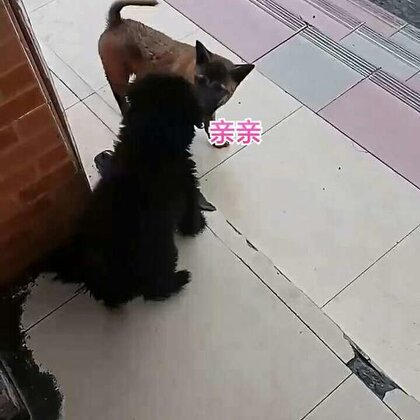 两只狗的爱恨情仇😂😂😂#宠物#