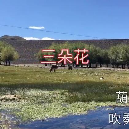 #音乐#吹奏一曲葫芦丝《三朵花》西藏公布民歌,节奏鲜明 阴阳顿挫 体现出公布人民对生活的憧憬和热爱👍👍👍
