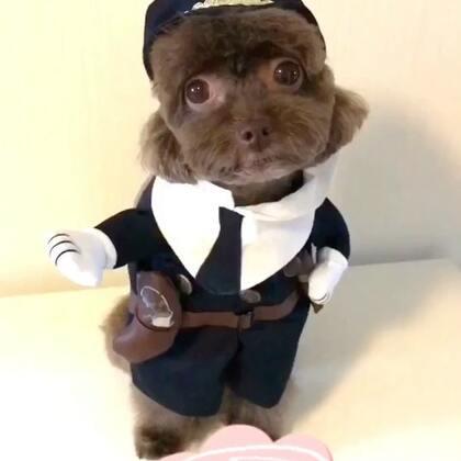 #宠物#帅帅哒小女黑猫警长--逗宝😜😜#我的宠物萌萌哒泰迪#