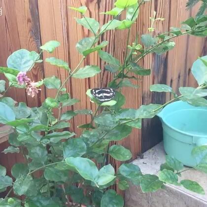 #花园##蝴蝶#冬天将至,我这些花放哪呢……