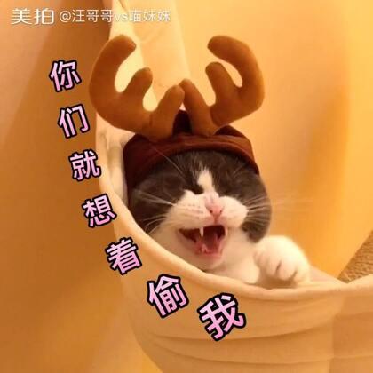 🌚圣诞老人的驯鹿走失到我家了 快告诉我 是该还回去 还是藏起来 急 在线等 👉🏻👉🏻这里这里 恭喜上个月沙发帝@花儿有刺 和@我们都以为还年少 👏🏻👏🏻快私信我 领取喵妹手机壳 笔芯🌹#宠物##宠物变装大赛##喵妹发福利#