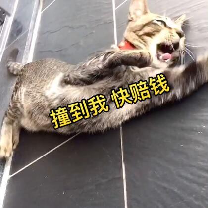 对着空气碰瓷😂我就问你们服不服😏#宠物##日志##宠界碰瓷王#
