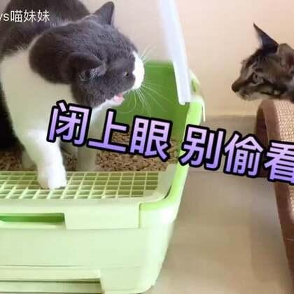 😡拉个粑粑💩都让你给看的憋回去了!泥奏凯🙄还看😠埋粑粑你也看😑想偷师学艺吗😒(快坐好,看猫片😜)#宠物##俩喵欢乐多##宠物有戏大赛#