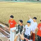 #U乐国际娱乐#秋天在华中农业大学的稻田唱《稻香》#翻唱#