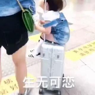 #搞笑宝宝#不想走路 捕捉一只坐在行李箱上生无可恋的左左🐶#我要上热门#