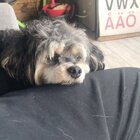dici,一个被剪了毛的小委屈。#宠物##dici#