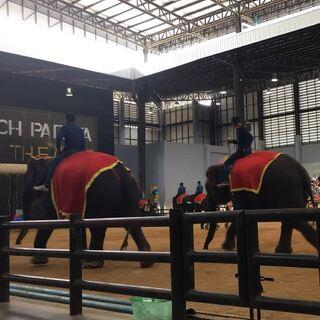大象表演开始了! #泰国之旅#