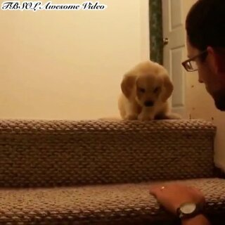 超有心主人交狗狗下楼梯#狗狗##宠物##萌宠#