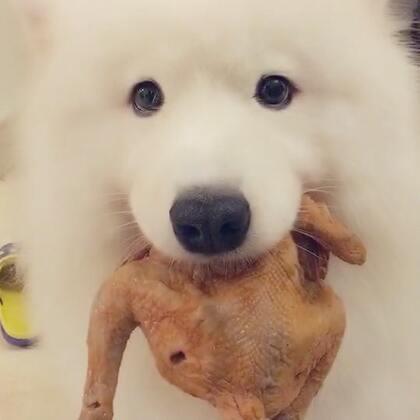 好久不发这么长的视频了!#宠物##热门##吃秀#