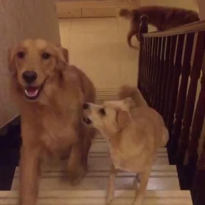 一个楼梯可以玩儿一整晚…😂😂😂#宠物#@宠物频道官方账号 @美拍小助手