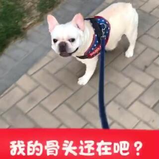 黑婶来串门啦👏👏👏#宠物##日志##来福和多吉#@宠物频道官方账号 @美拍小助手