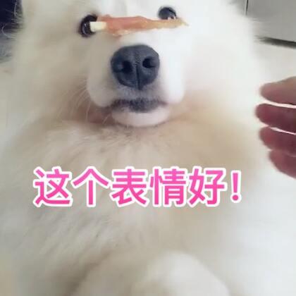 布宝今天心情格外的好!#宠物##汪星人#@宠物频道官方账号