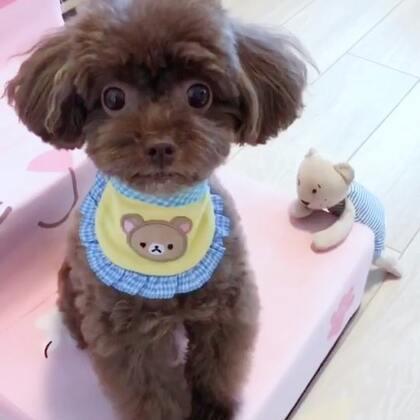 #宠物##吃秀#逗宝是最听麻麻说的乖宝宝😘😘麻麻爱你哦❤❤#我的宠物小精灵#